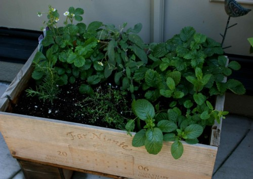 Estelle's herbs in a recycled box